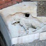 מילאנו: האגדה על סקרופה סמילנוטה (Scrofa Semilanuta) חזירת הבר הצמרירית למחצה